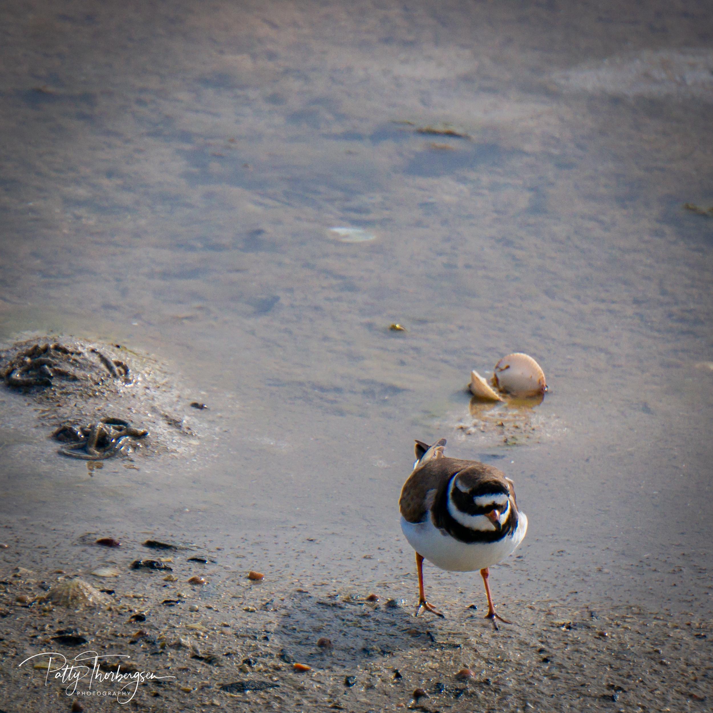 sandlo © Patty Thorbergsen-09727.jpg