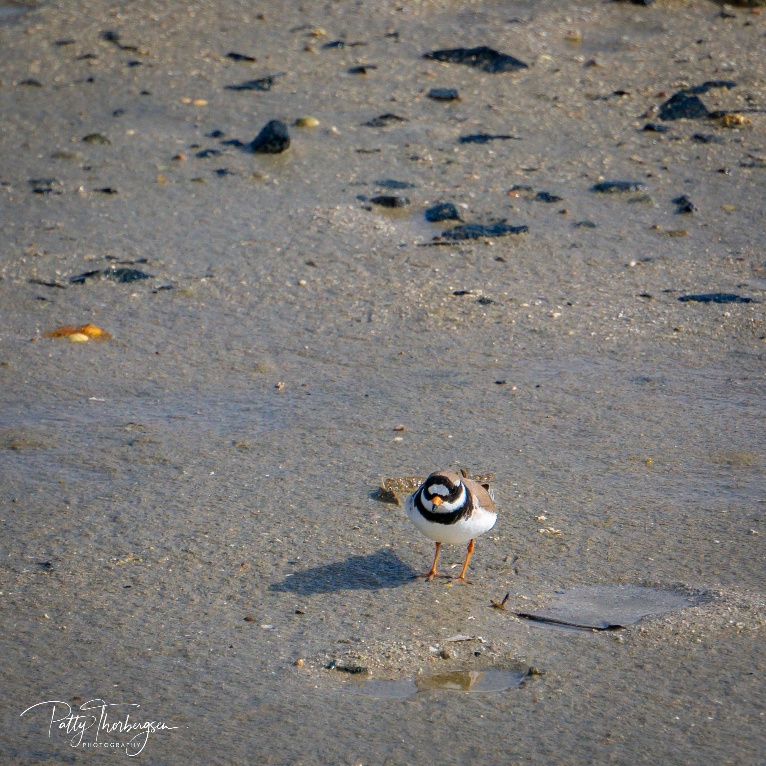 sandlo © Patty Thorbergsen-09741.jpg