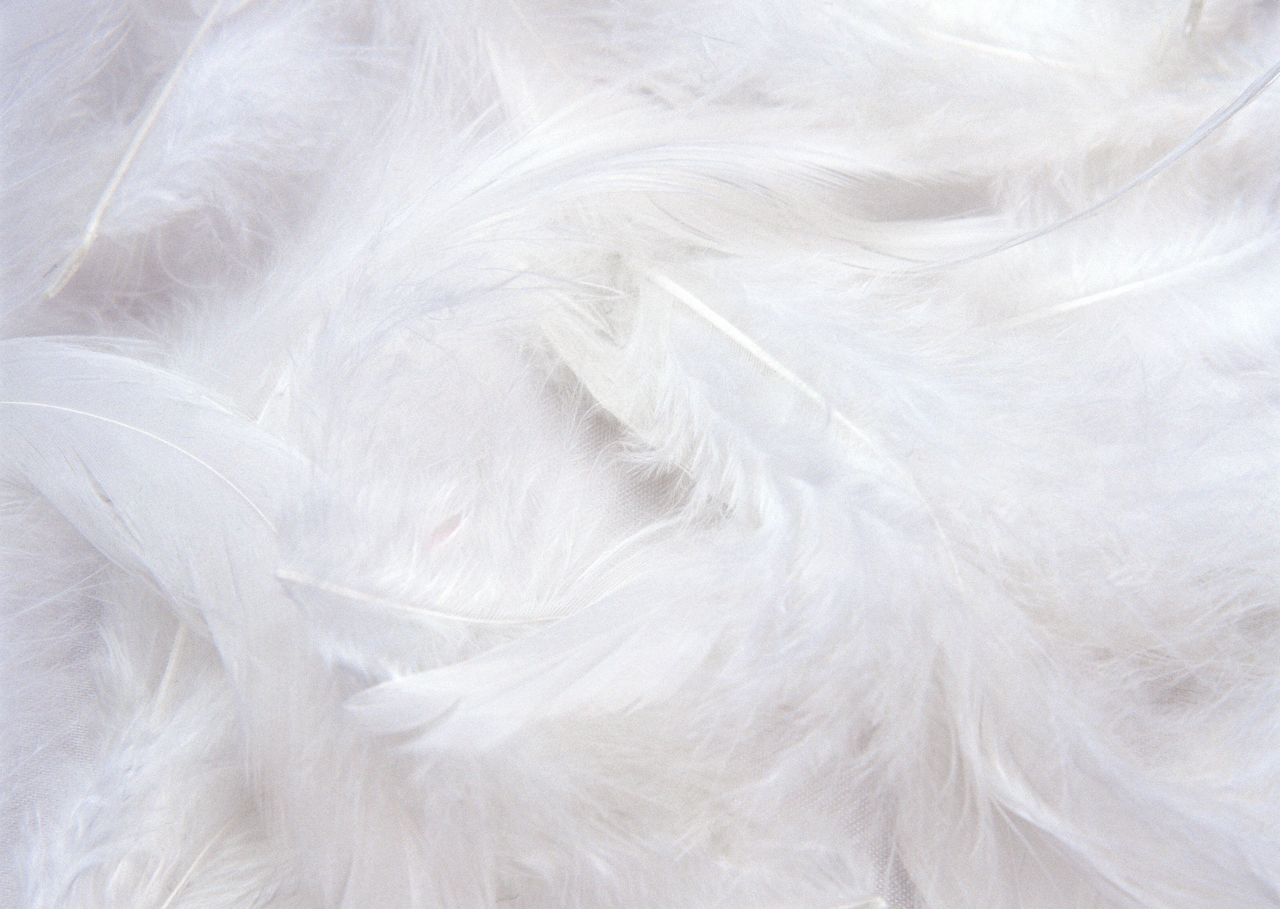 White_Feathers_Background.jpg