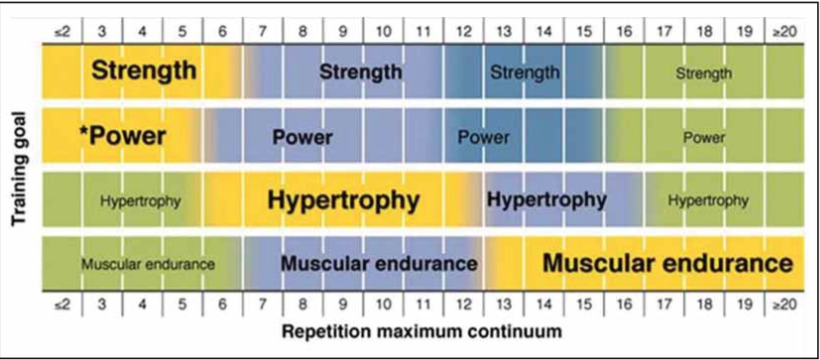 NSCA Basics of Strength Training