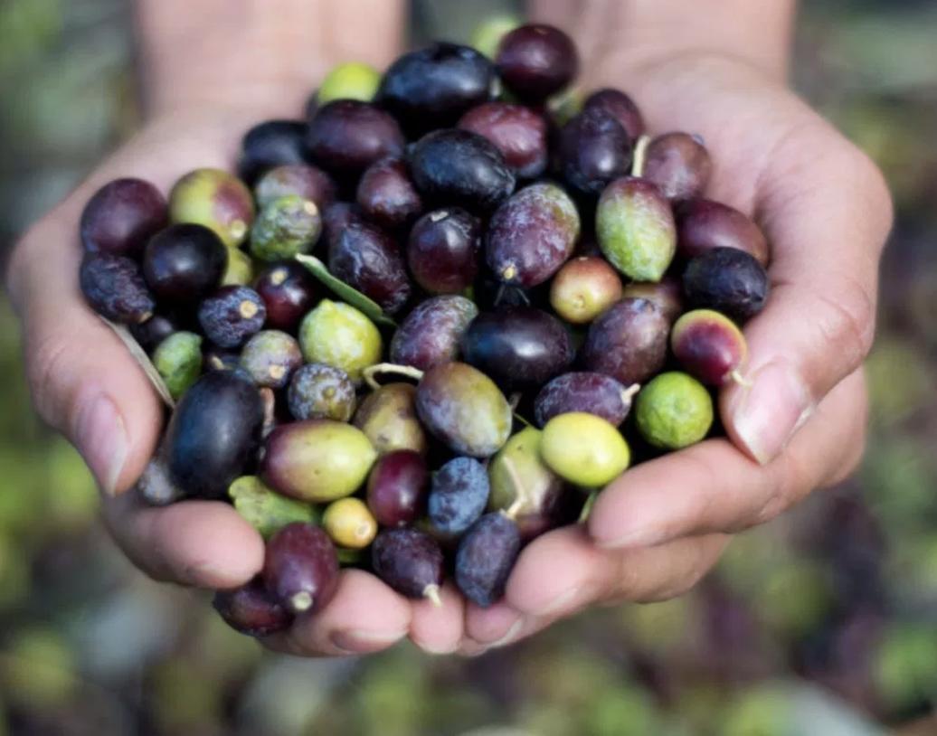 Ex Albis Ulivis Olive Oil