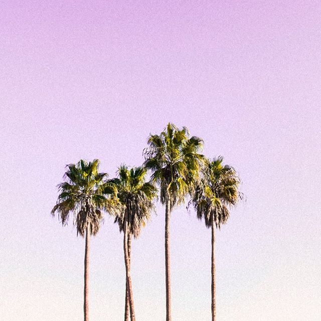 May your day be filled with palm trees and sunshine. 🌴☀️💕 . . . . #nukeswimwear #palmtrees #summer #pink