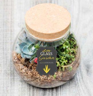 Little Glass Garden Kit - Just Add Plants