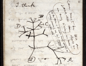 Charles Darwin's famous sketch of his theory of evolution through natural selection