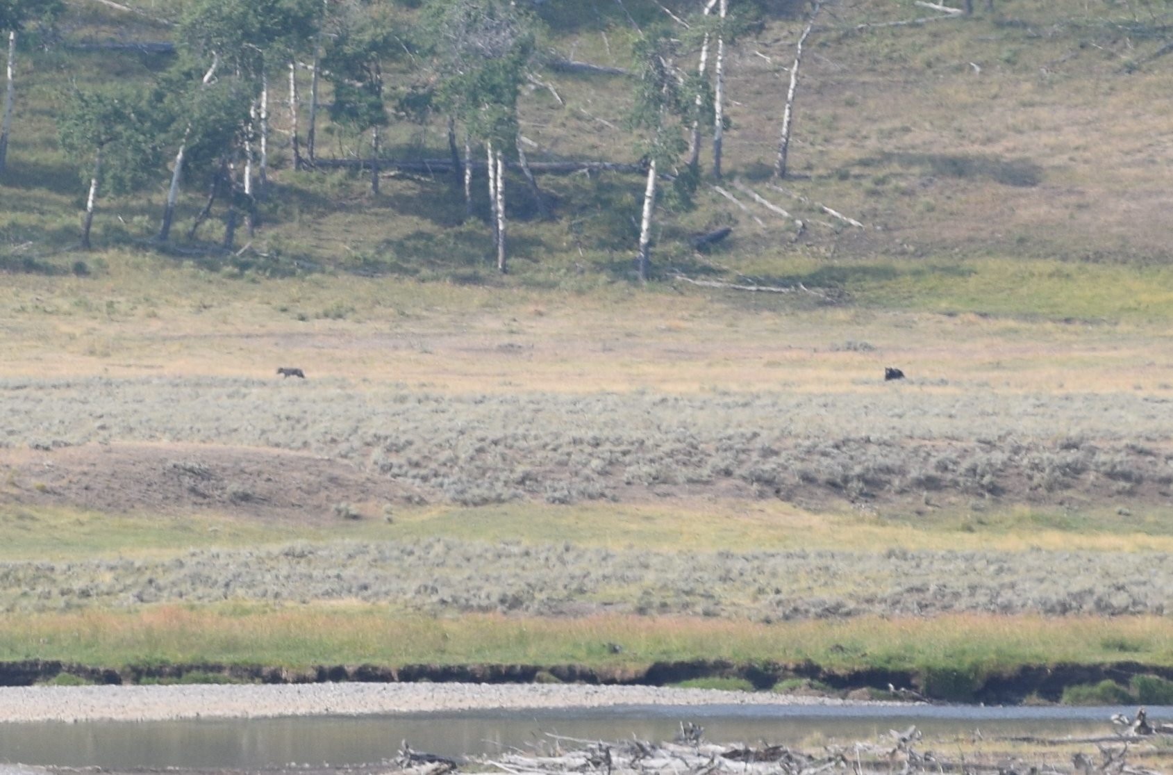 The wolf is the dark speck on the left, and the bear is the one on the right. Unfortunately, I only have a 200mm lens and they were around a kilometer away.
