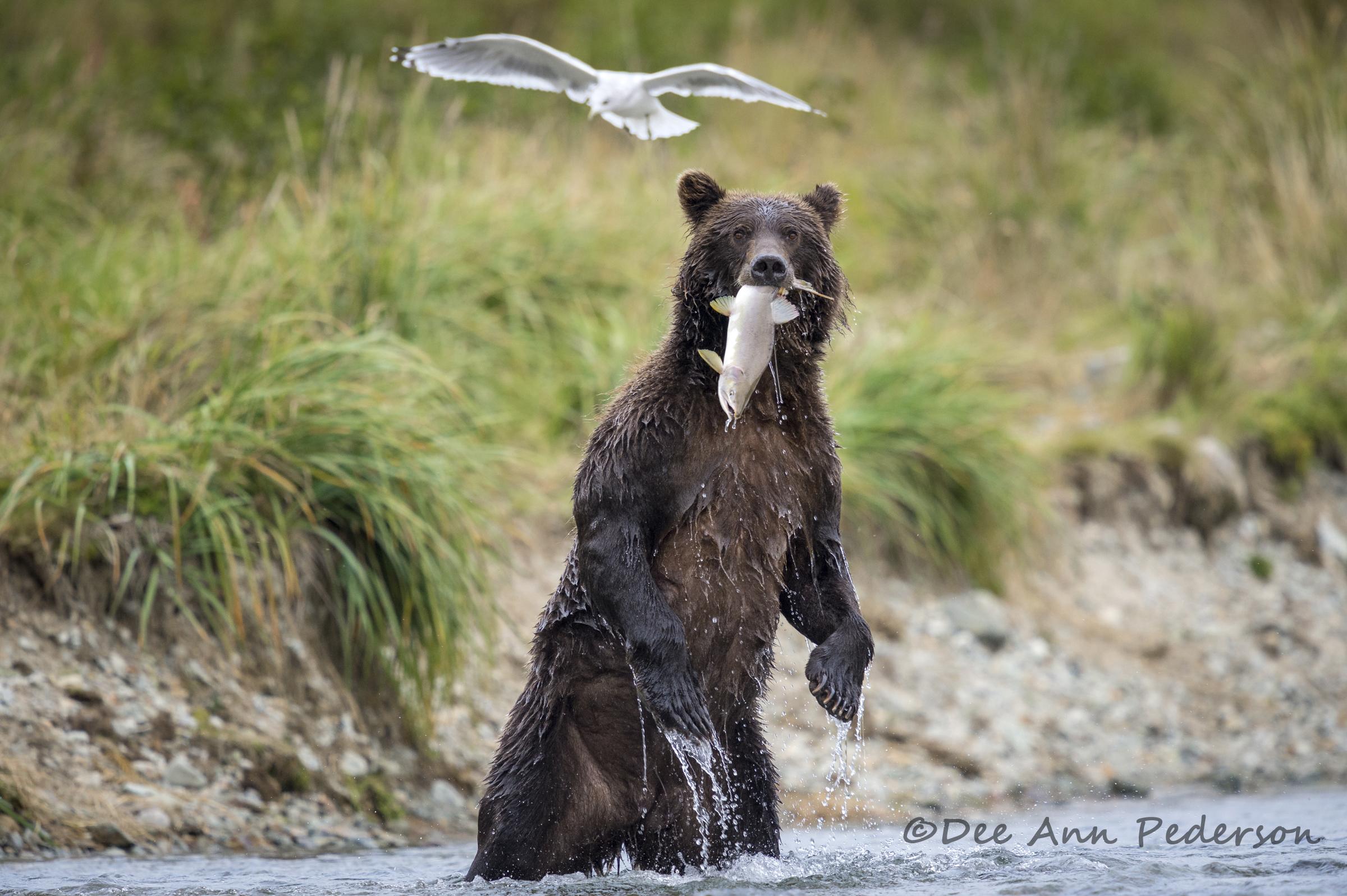 DPederson-Passionate&FavoriteAnimal&Biodiversity20140907_DP__D4S3669.jpg