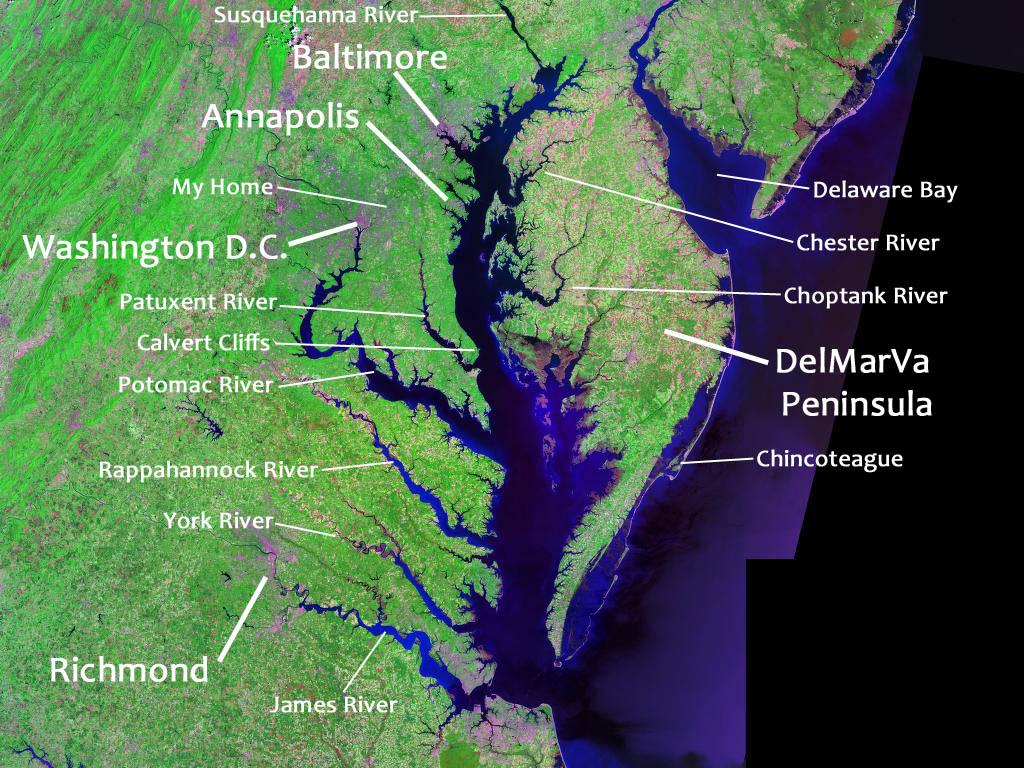 The Chesapeake Bay is one of the world's biggest estuaries. Original image from  NASA Landsat .