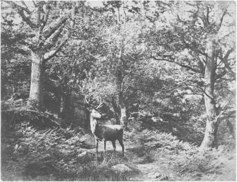 Deer Parking, by John Dillwyn Llewelyn, 1852, via  Tanguay Photo .