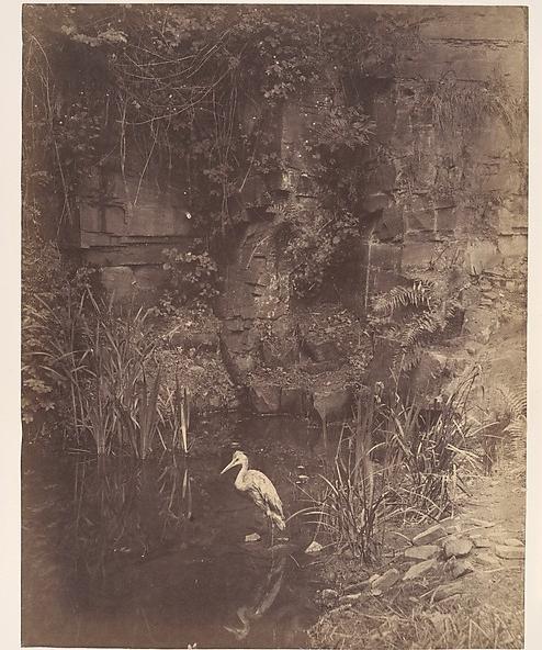 Piscator No. II, by John Dillwyn Llewelyn, 1856, via the  Metropolitan .