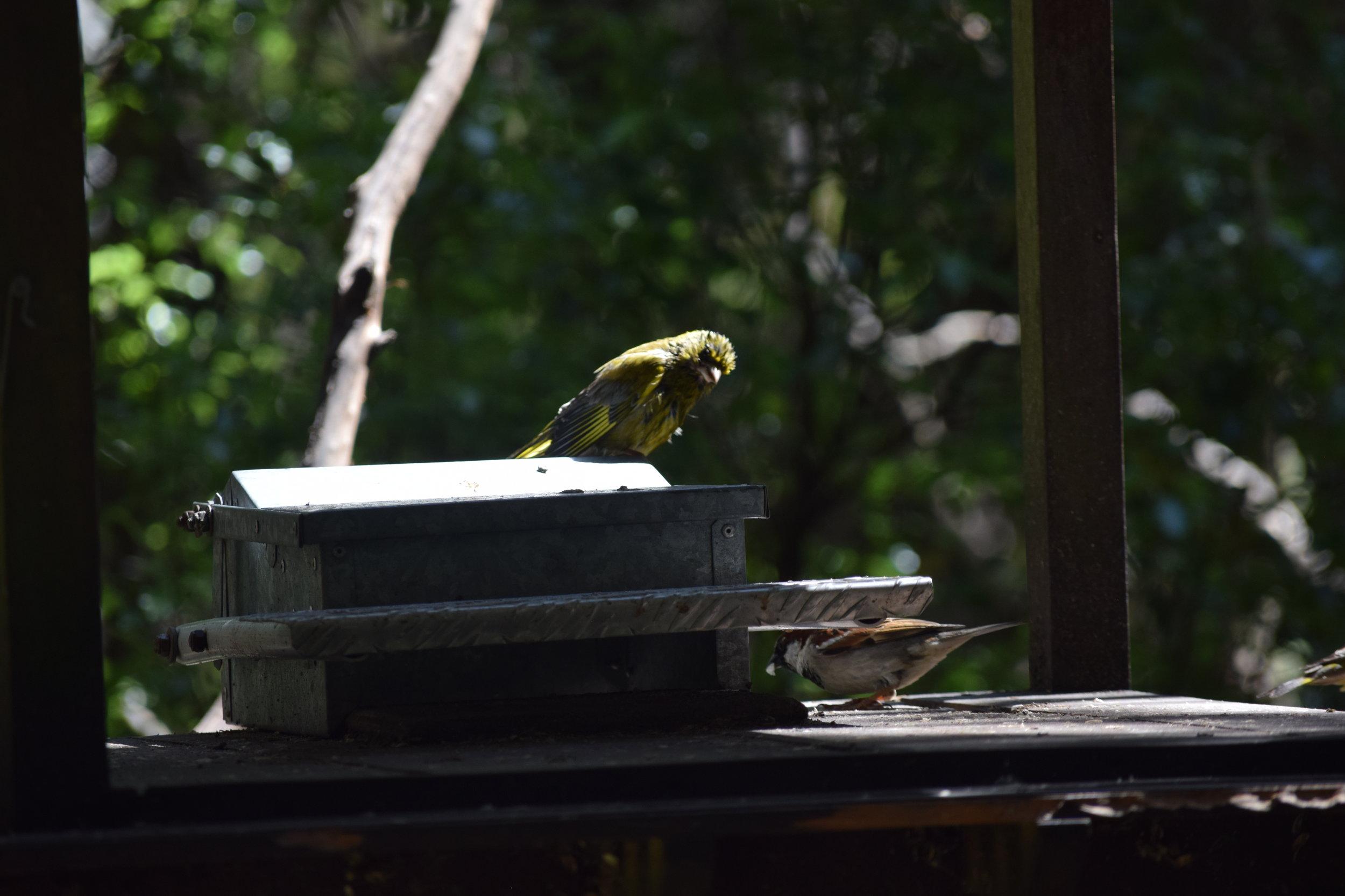 Hey! How do  we  get into the feeder box?