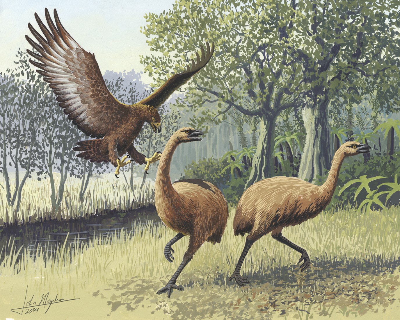 """Haast eagle attacking moa (which, for scale, can stand up to 8 feet tall). Image by  John Megahan , for  PLoS article  """"Ancient DNA tells story of giant eagle evolution""""."""