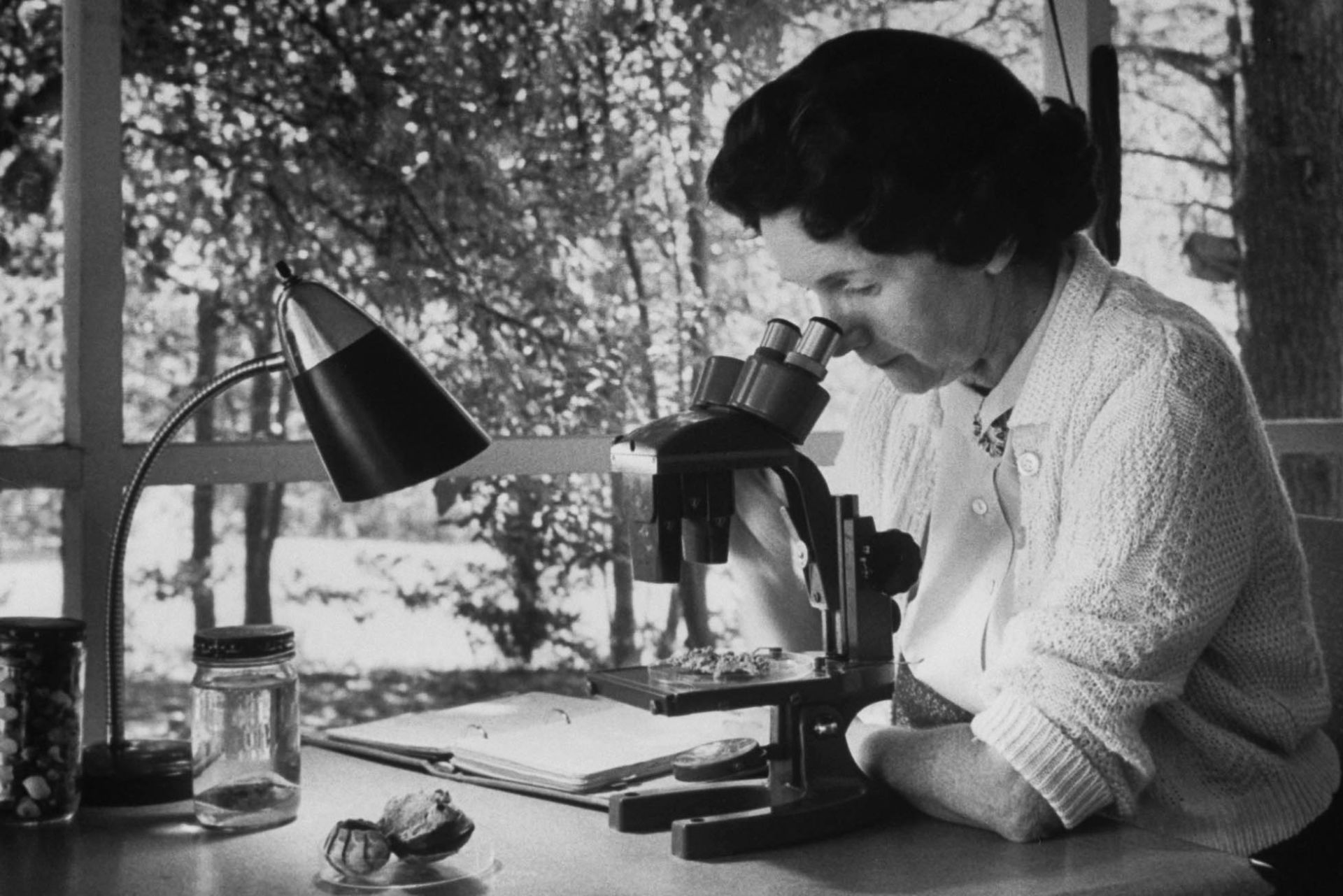 Rachel Carson conducting field research. Image from the  US Fish and Wildlife Service .