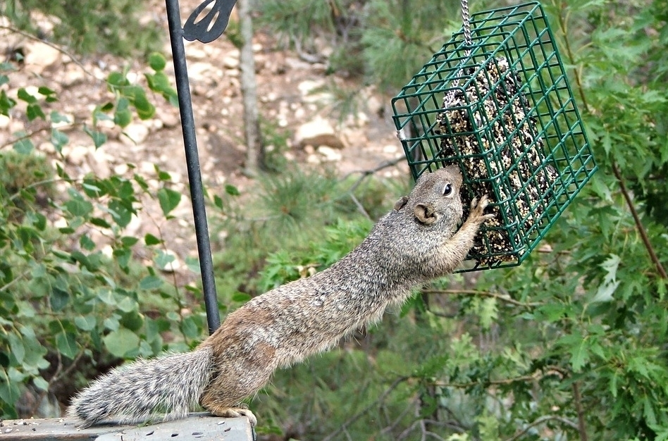Does the feeder mean that this isn't a natural wildlife photo?