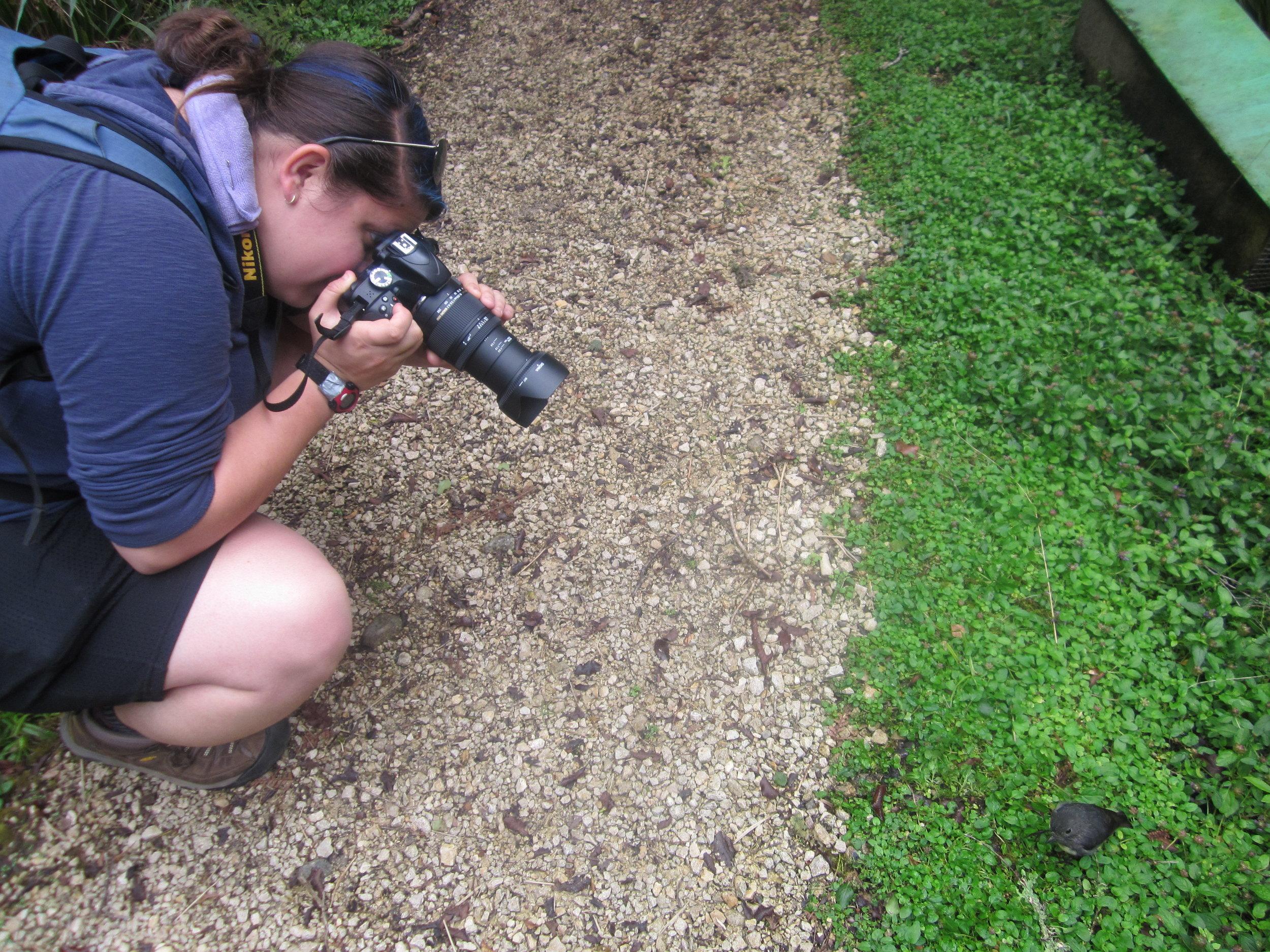 Me taking a photo of a NZ robin at Orokonui Ecosanctuary near Dunedin