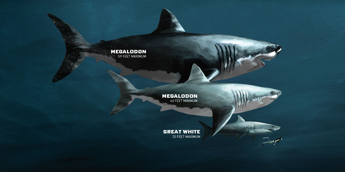 Modern divers are probably pretty glad that the megalodon isn't around anymore. Image from  PADI .