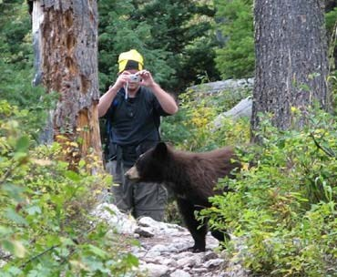 This photographer is WAY too close to the bear, endangering both himself and the animal. Image by  Rebecca Wiles, via NPS.
