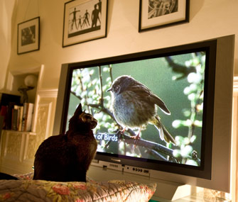 Most of us enjoy a good nature documentary. Image by Roger Bamber.