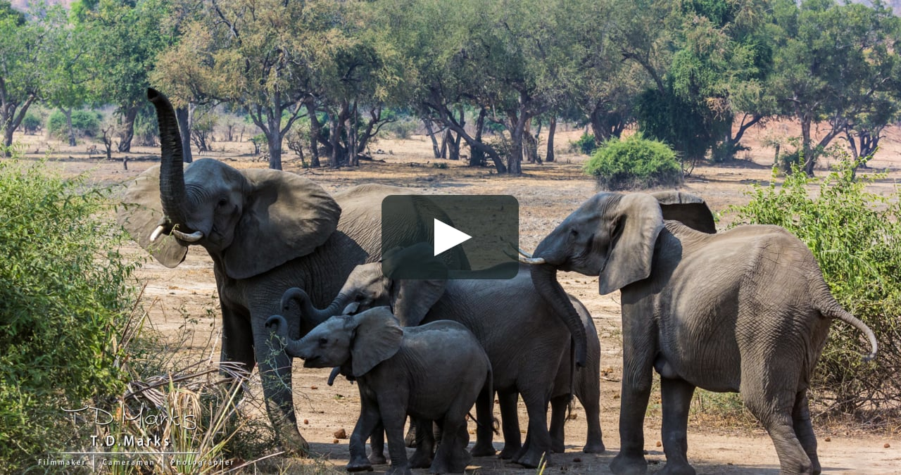 We've become accustomed to seeing wildlife with a play/pause button on hand. Image from a preview of a film by  TimFromZim .