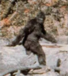 Frame 352 of the Patterson-Gimlin film that purportedly shows Bigfoot.