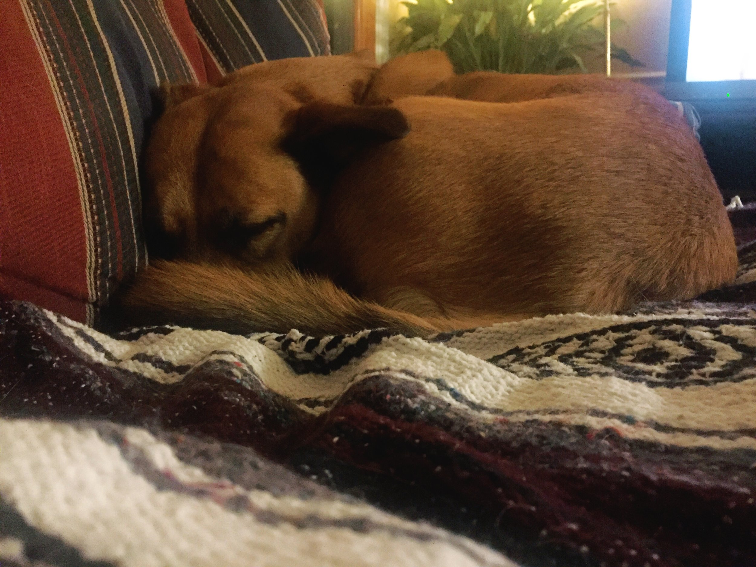 A week ago today, I was recovering from my hometown vacation. I was camped in front of the TV nursing a cold and decompressing after a packed week of reunions and merriment. This is my parent's dog doing the same, snuggling to keep warm, which is fitting to share tonight before the 'bomb cyclone' of 2018