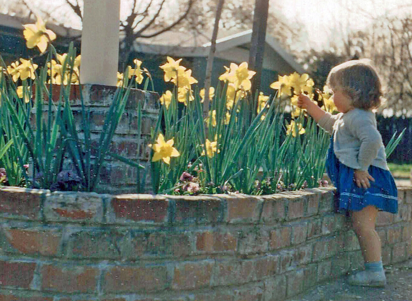 Margee toddler and daffodils cropped.jpg