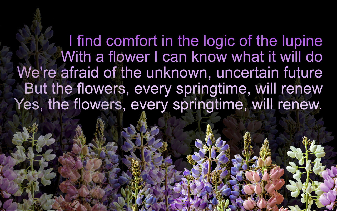 lupine quote.jpg