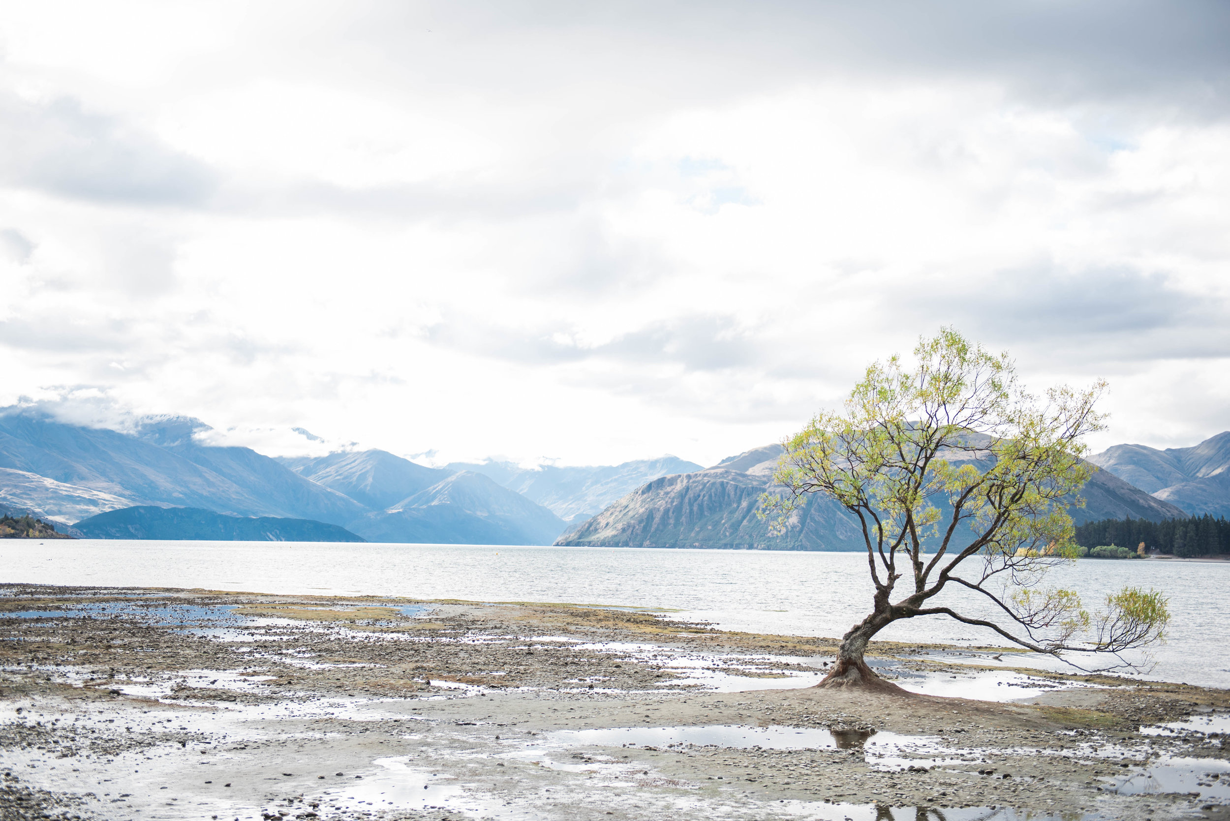 finally made it the famous wanaka tree in the water!! ... and they hadn't had any rain...