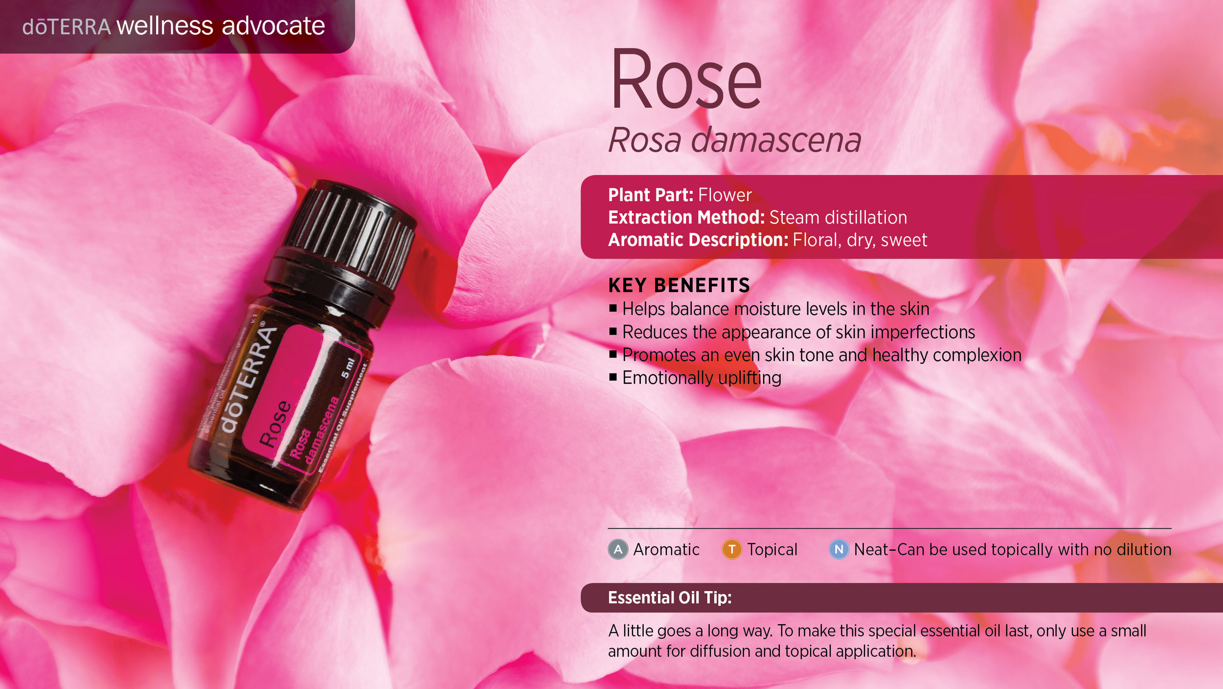 wa-rose.jpg