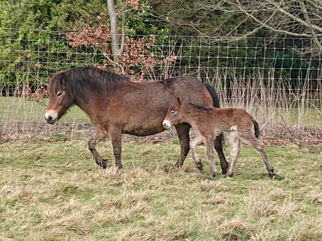First Foal of 2019
