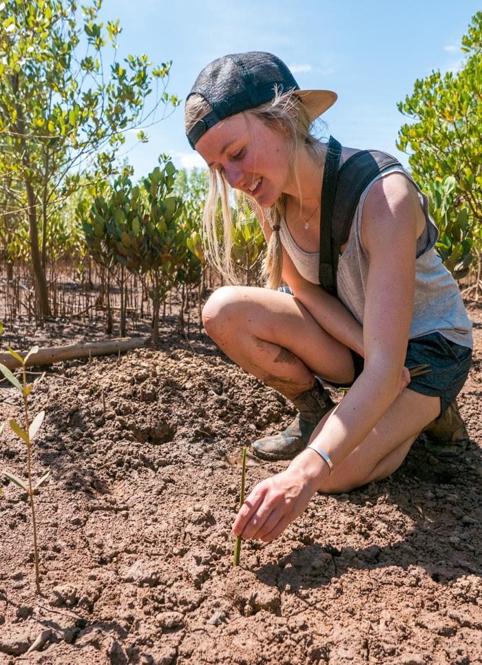 Soph planting a Mangrove propagule in one of the plantations near Majunga