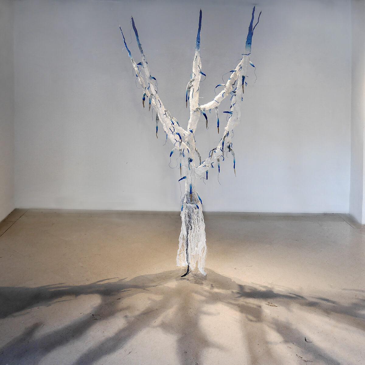 Papaver Setigervum Roots Shadows