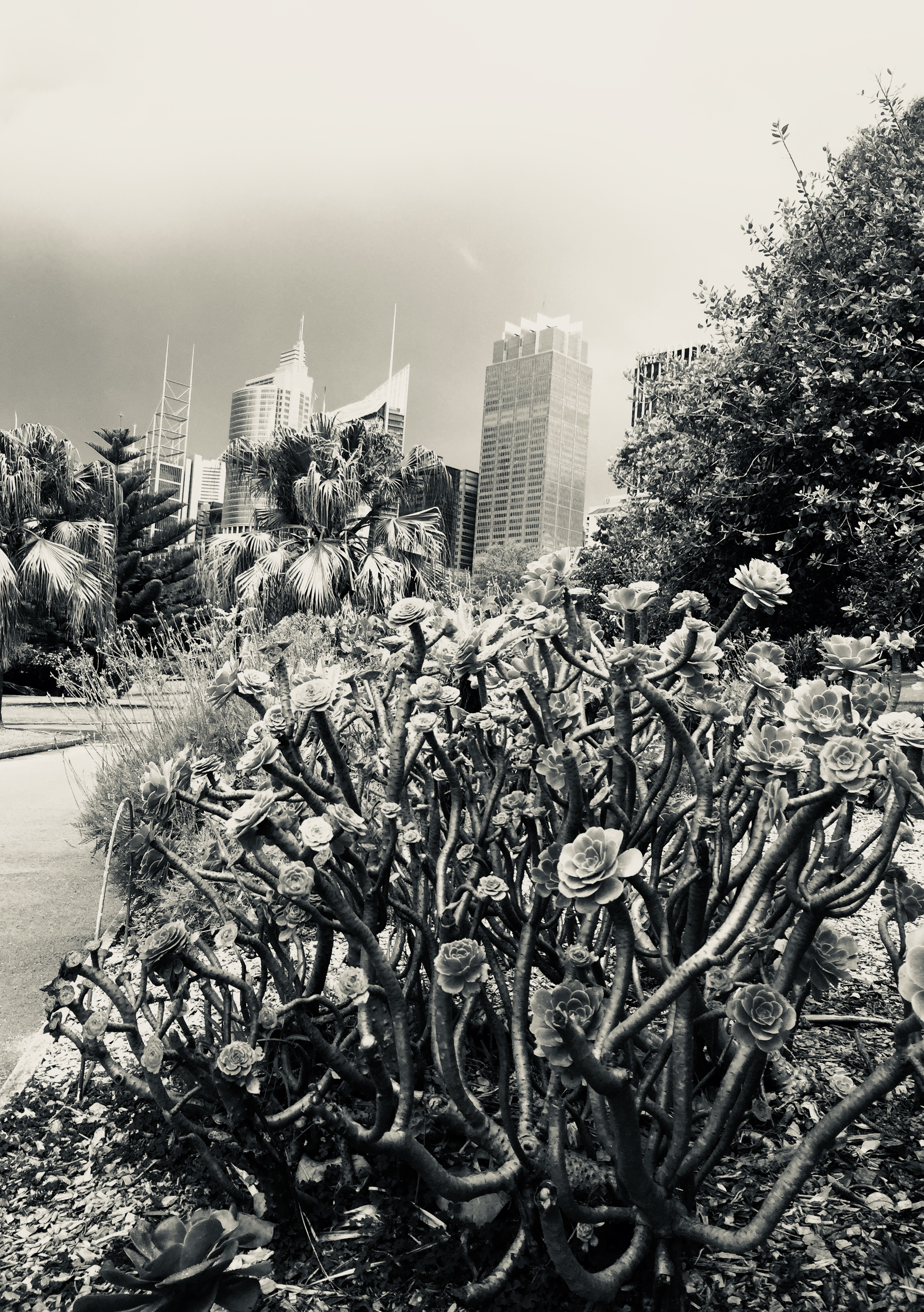 My City Sydney