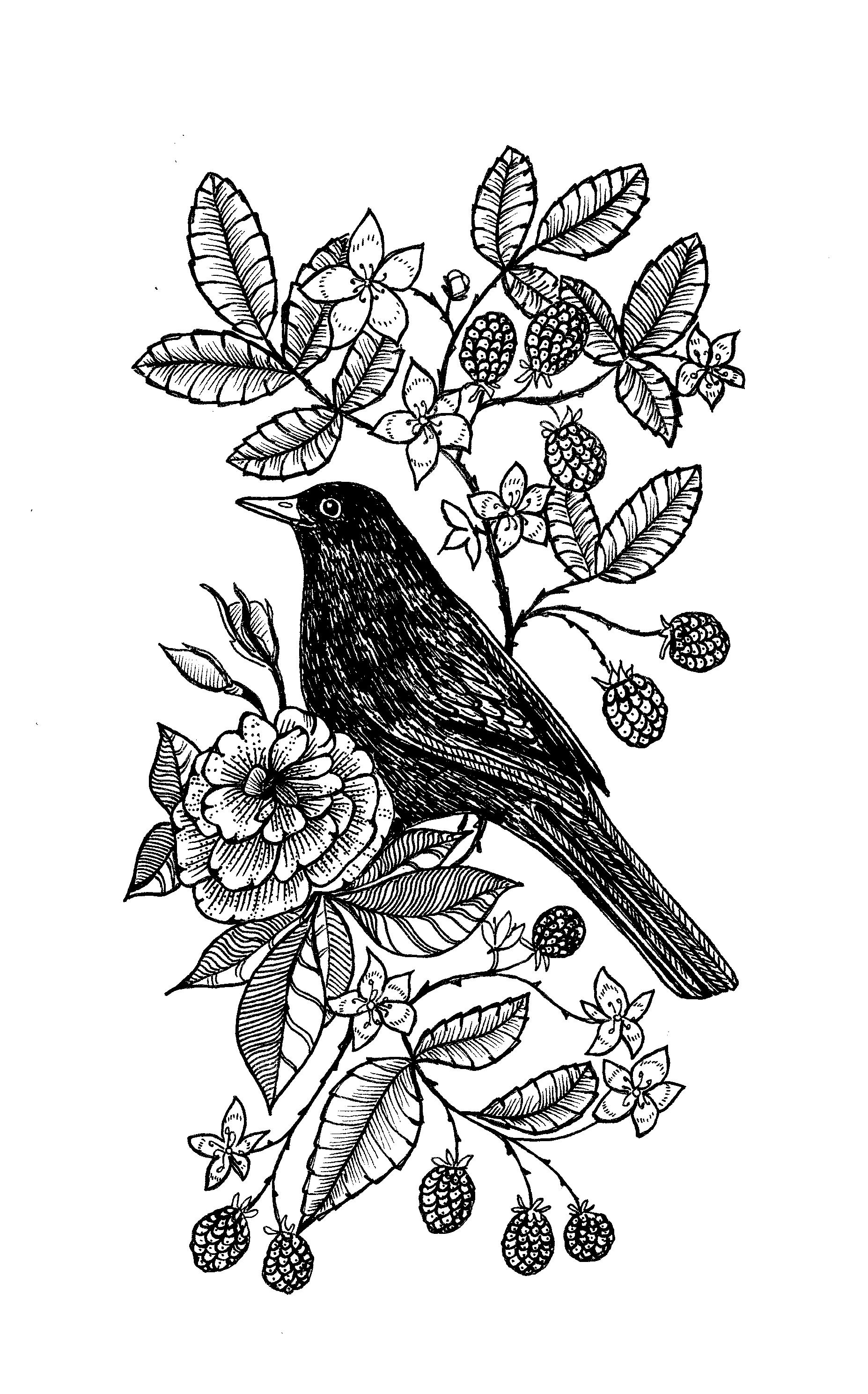 Blackbird and Blackberries Tattoo design 2016.