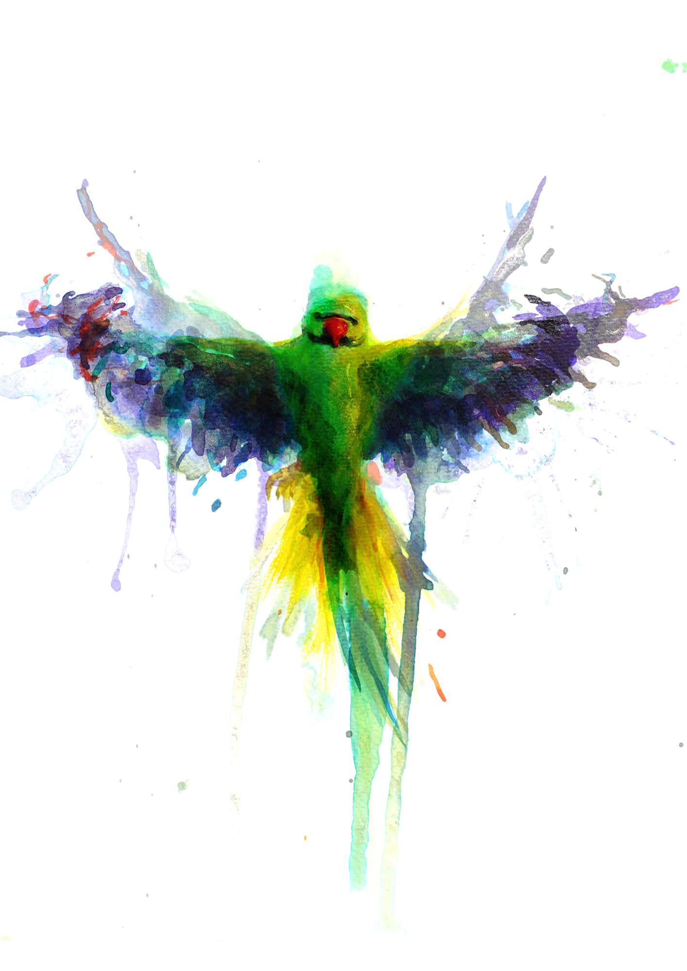 Parakeet PRINT 02.jpg