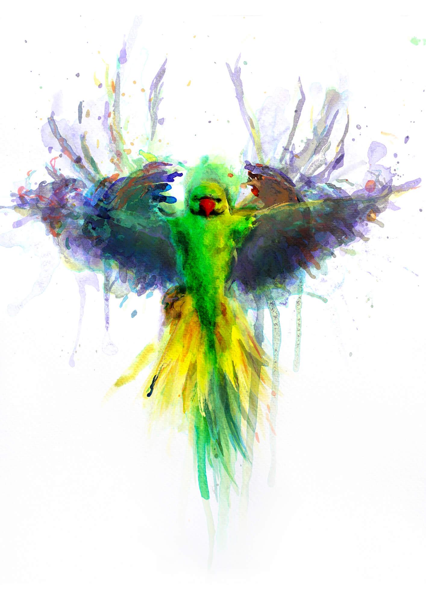 Parakeet PRINT 06.jpg