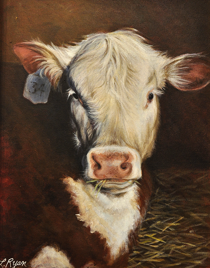 """""""Hereford Cow"""""""