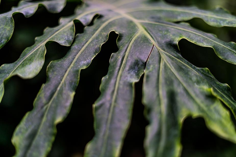 green-leaf-closeup_925x.jpg