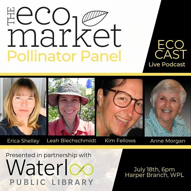 THIS THURSDAY! A live recording for #EcoCast podcast by The Eco Market featuring some of the Waterloo Region's pollinator experts. Do we need to be worrying about our local pollinators? What are some of the factors contributing to pollinator health declines? How can we as community members help pollinators? Join us for an informative evening - free to attend, but please be sure to RSVP to let us know you'll be there. Find all the details through the link in our bio! • • Know someone who may want to attend? Tag them below to let them know about our pollinator panel! 🐝🐝