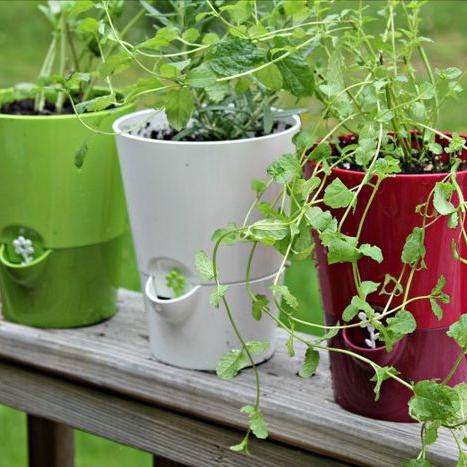 6 Hacks for Starting an Herb Garden