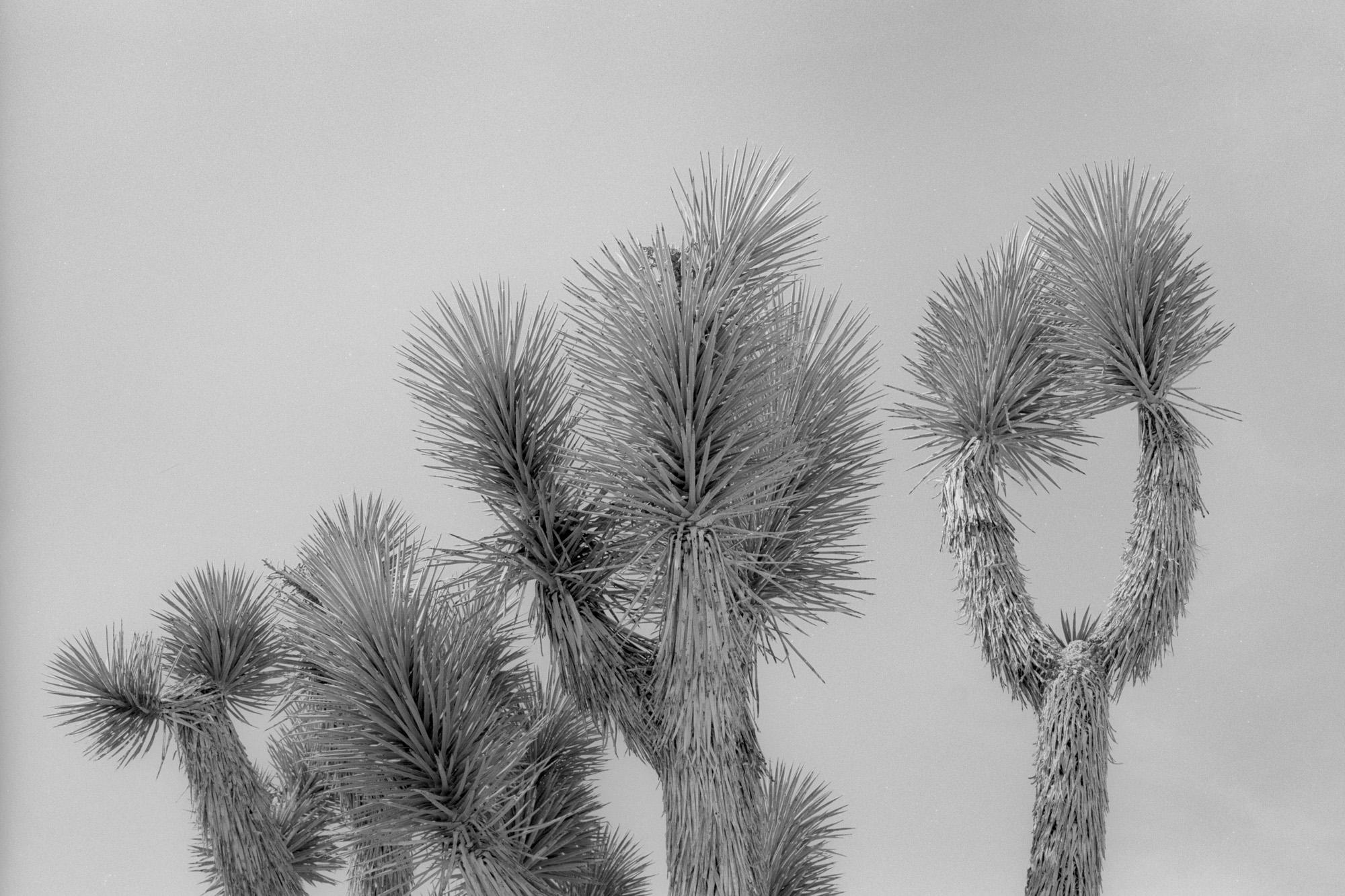 35mm-16.jpg