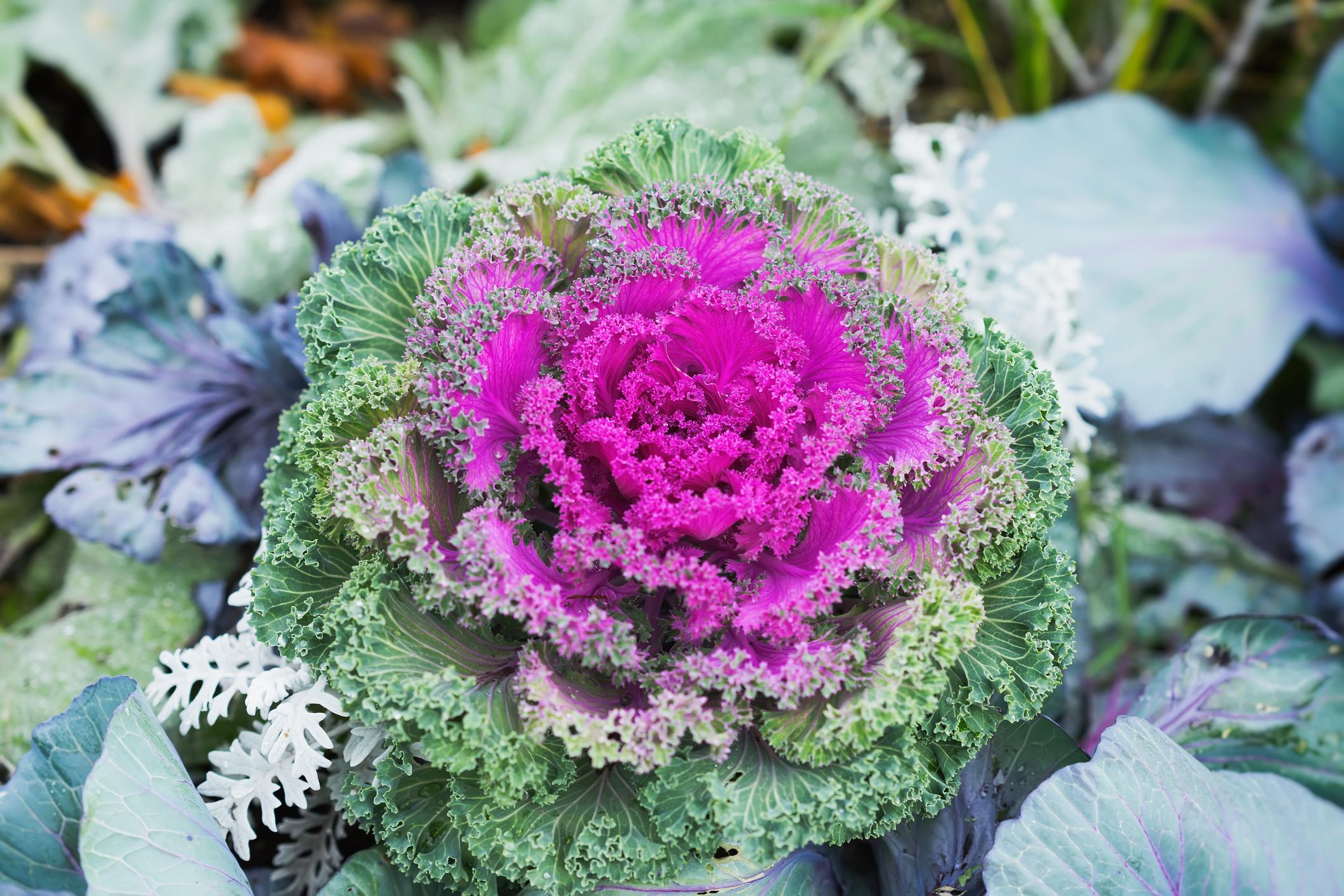10 Winter Flowering Plants For Your Pacific Northwest Garden