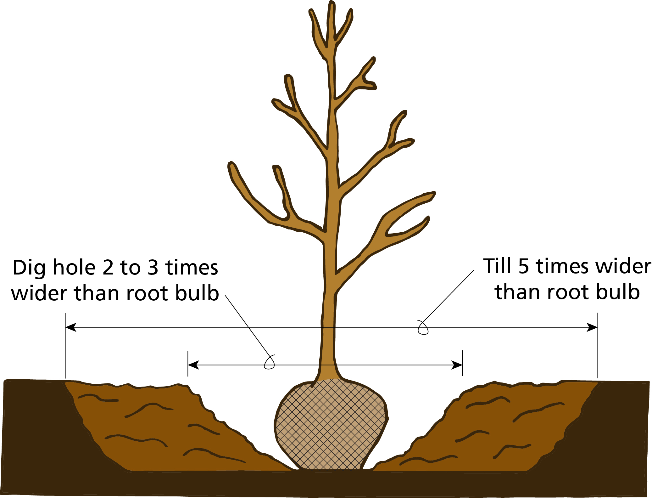 Tree planting illustration .jpg