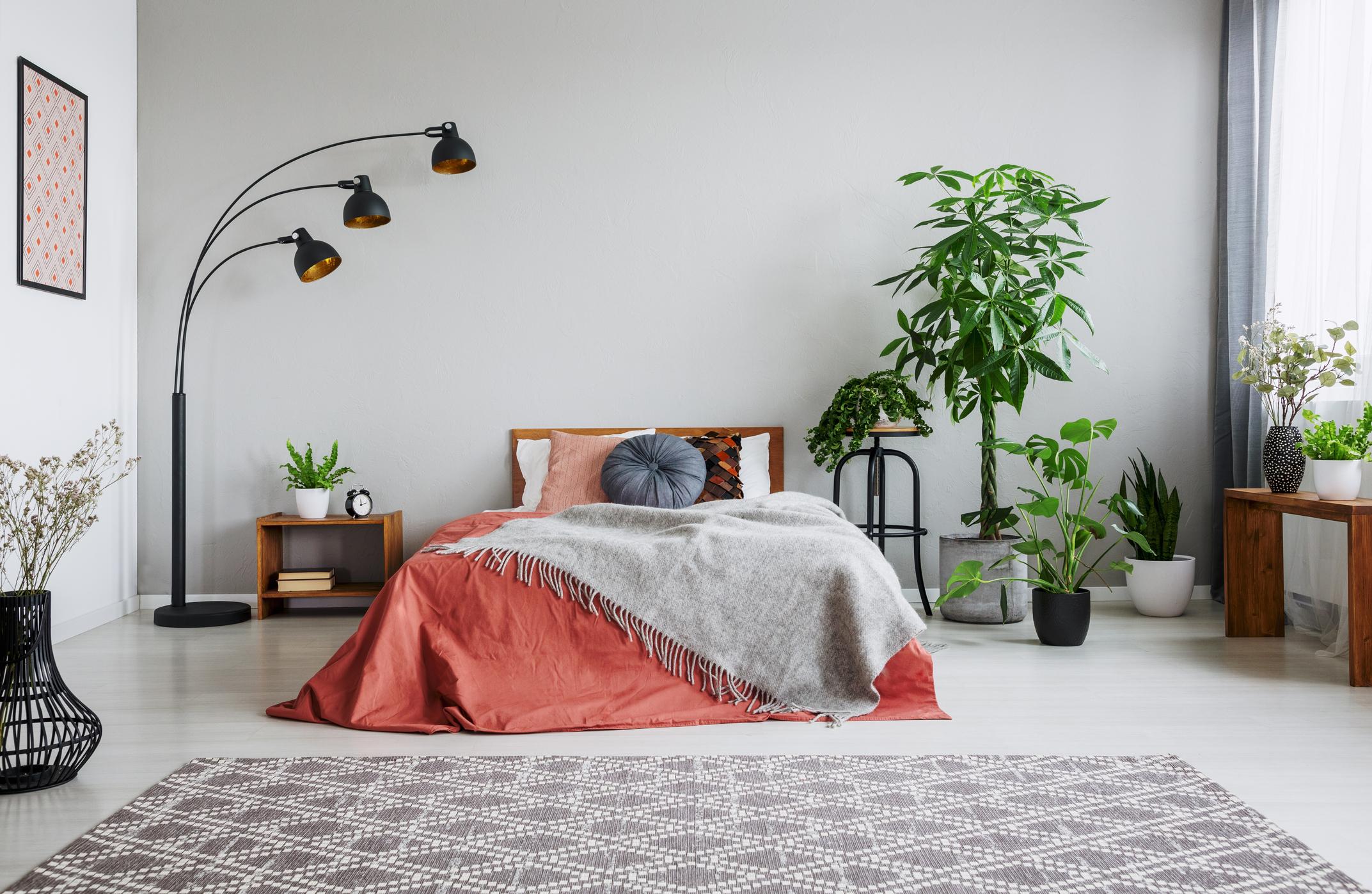 Bedroom Houseplant Cover.jpg