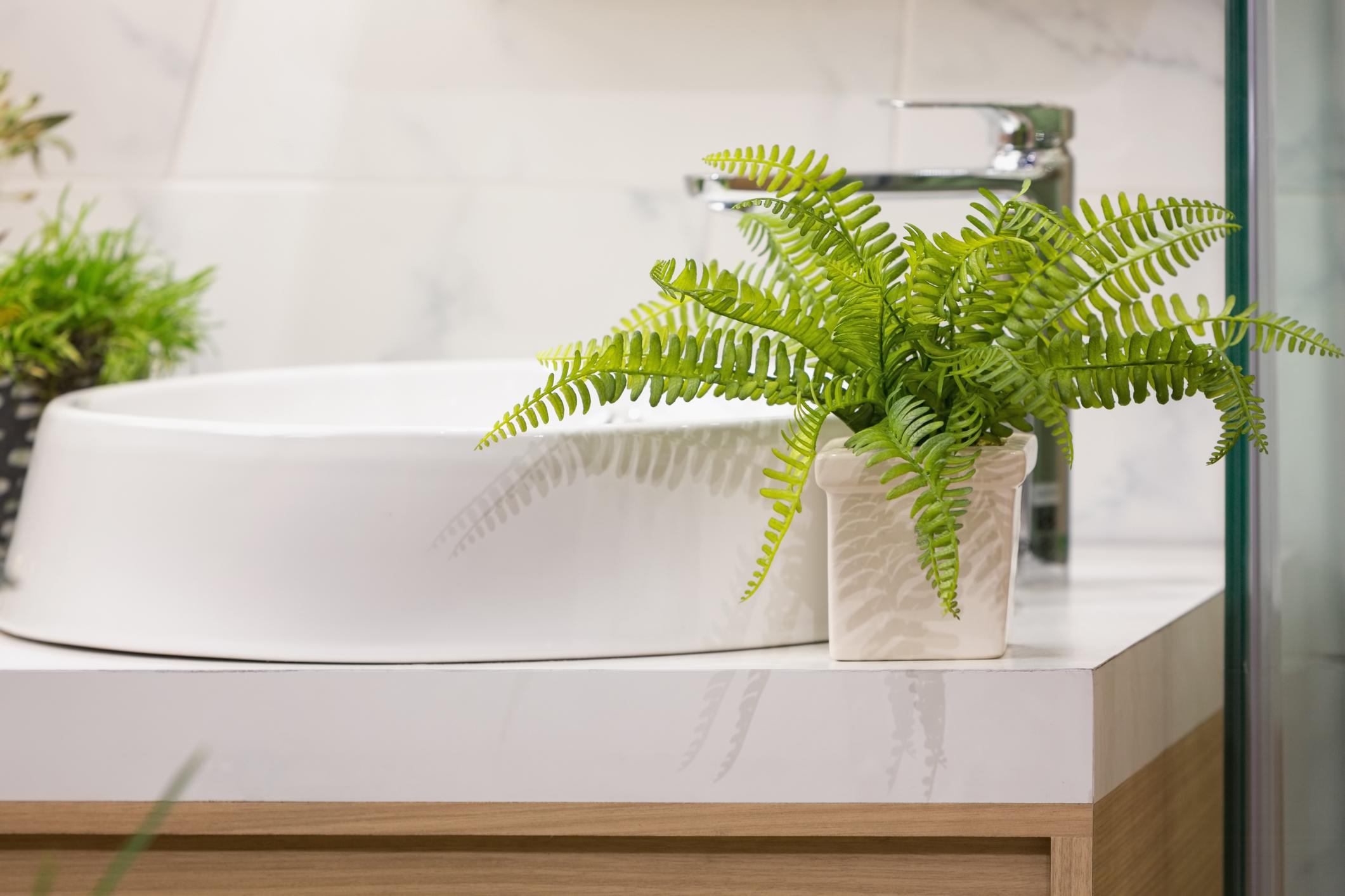 Bathroom - Boston Fern.jpg