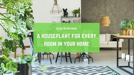 Who else loves houseplants? 🙋🏼♀️🌱 Our newest blog post goes over the perfect houseplant for every room in your home! Link in bio.