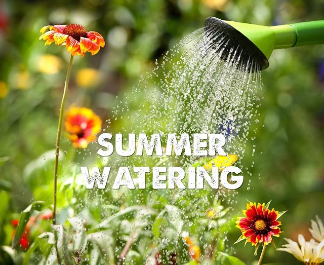 Hot temperatures are in the forecast for Oregon! 🥵 Maximize your watering efforts by watering plants in the morning or late evening to reduce evaporation.🌱🚿