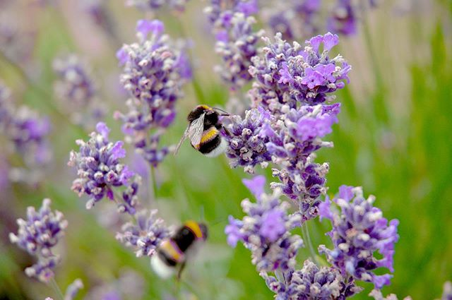 Happy Pollinator Week! 🐝🦋🐤