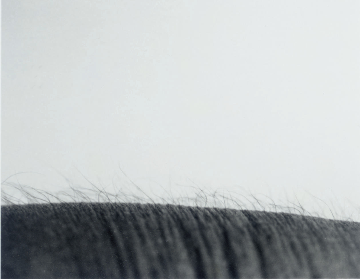 Study After Untitled Landscape, 1987