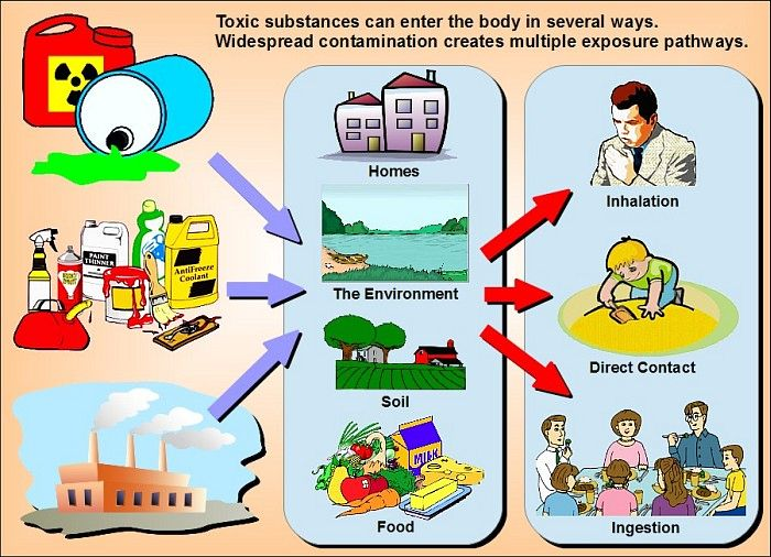routes of toxic exposure .jpg