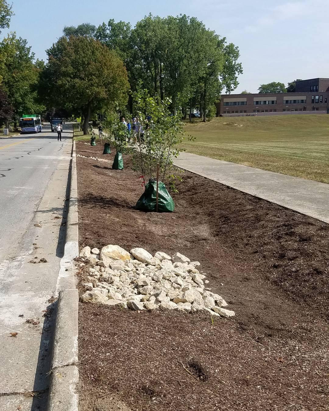 North Park Montessori Bioswale Trees